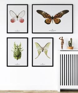 Fotografia New Collection (S16) | Hagedornhagen Copenhagen