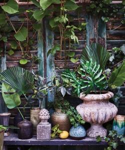 Liść palmy dekoracyjny liść skandynawki