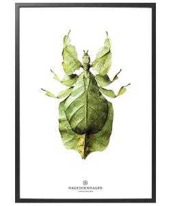 Phylliidae (B10) | Hagedornhagen Copenhagen | Design Spichlerz